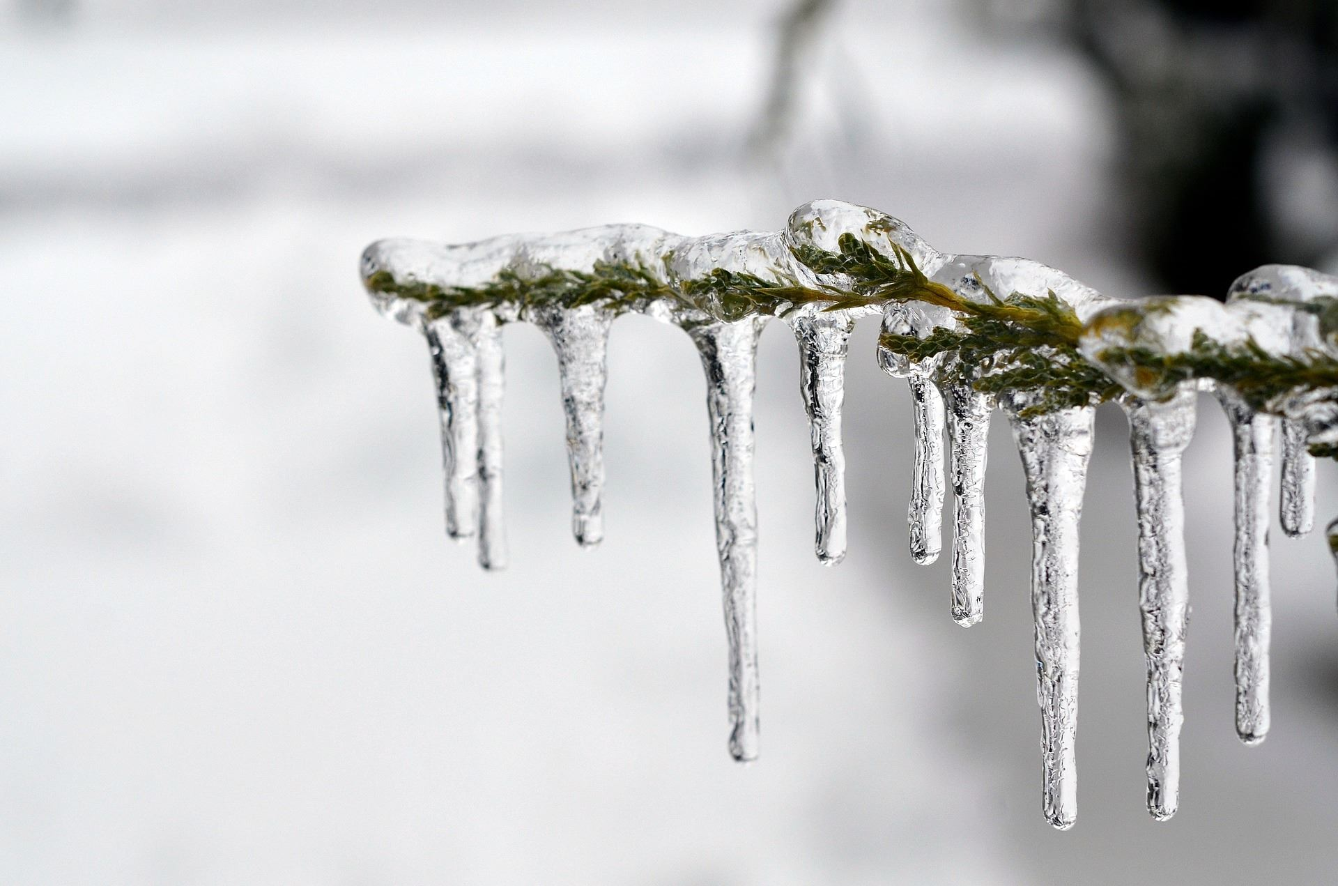 Tree Branch Encased in Ice